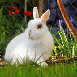 Por quê esse coelho venceu?